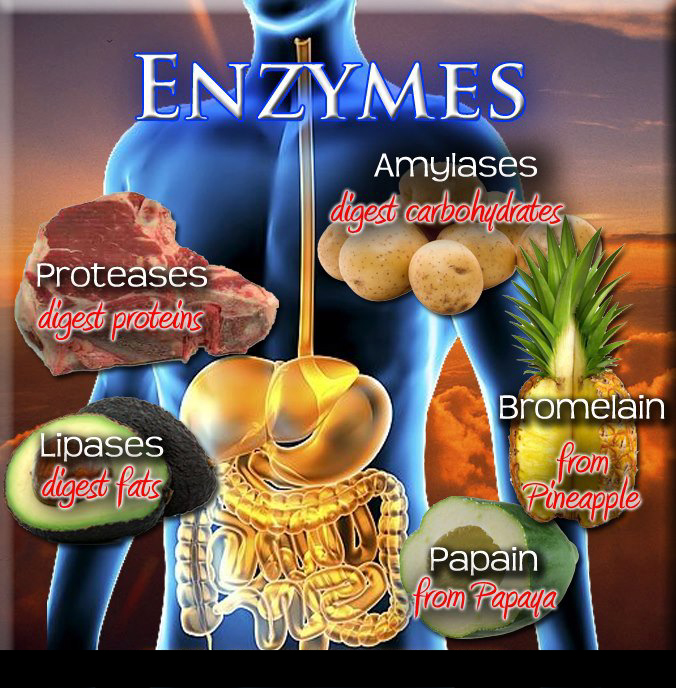 Enzymes, health, longevity, strong digestion, strong immune system, inflammation