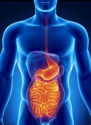 digestion cornerstone for overall health, plant enzymes, gas, bloating, cramping, crohn's, IBS, constipation, diarrhea, irritable bowel, bowel toxicity, SIBO.